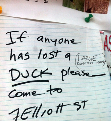 I hope the duck was claimed