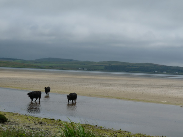 Coos on the beach