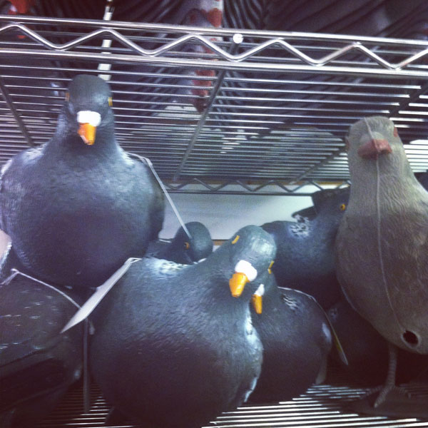 Plastic decoy pigeons at Highland Industrial Supplies