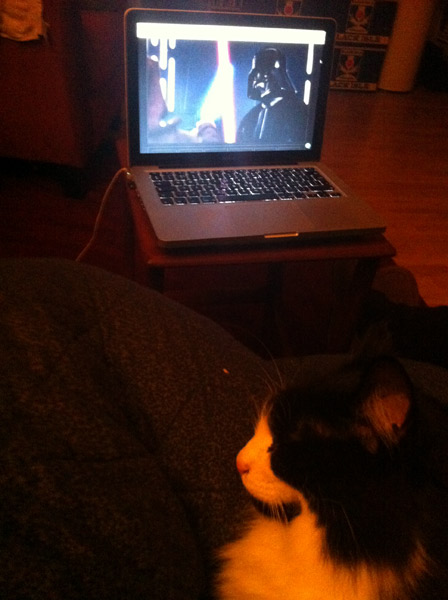 Cat watching Star Wars