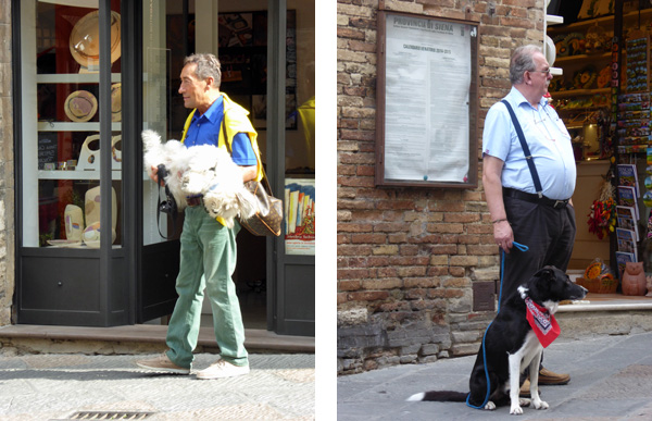 Dogs of San Gimignano