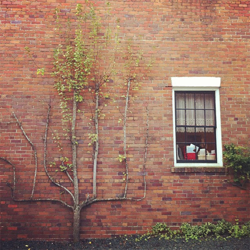 Wilmington B&B