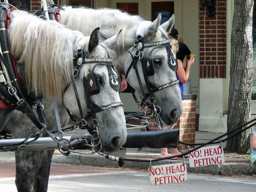 No! Head Petting