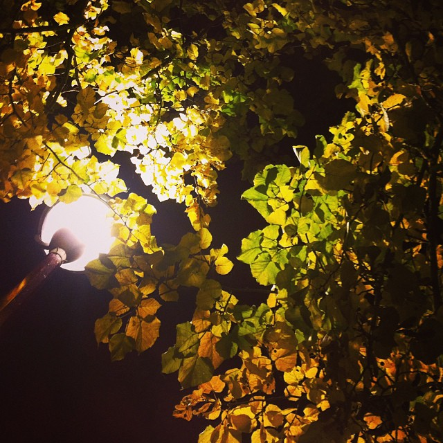 Nighttime trees