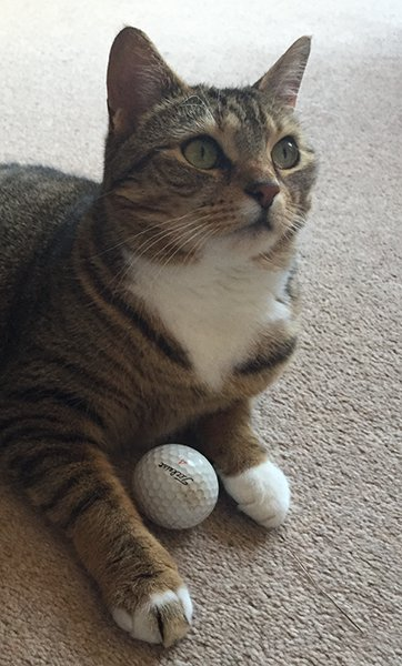 Ziggy and her pet golf ball