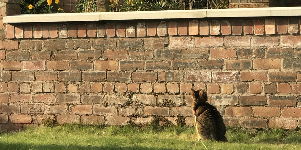 Ziggy at the wall