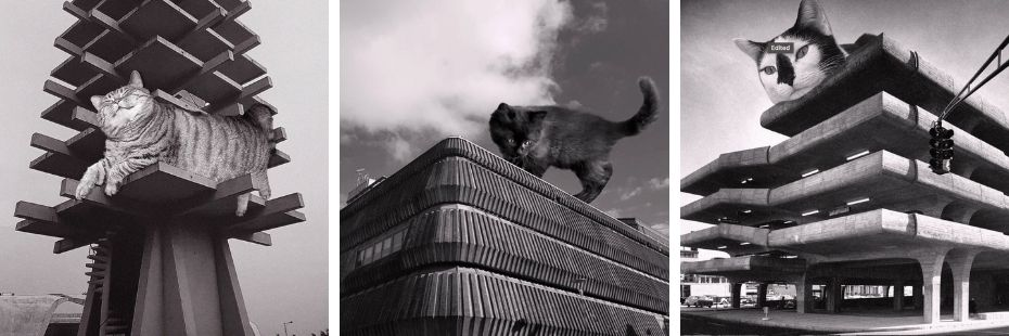 Cats of Brutalism